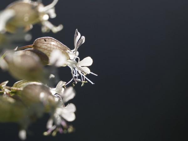 Blaassilene-foto-Twan-Teunissen-1